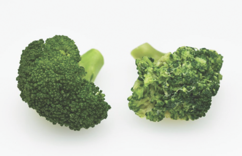 Comparison of steam oven vs. conventional oven cooked broccoli