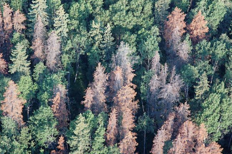 Canadian forest from the air